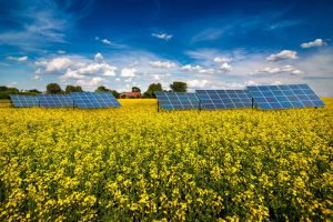 Panoramic View On Yellow Rapeseed Field With Solar Energy Panel